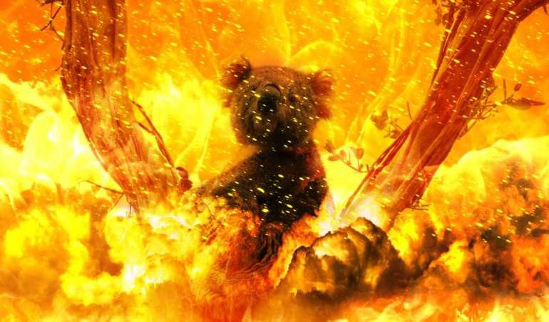 Ein Koala sitzt in einem brennenden Baum. Eine Fotomontage.