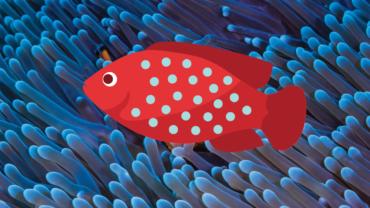 Fisch vor Koralle